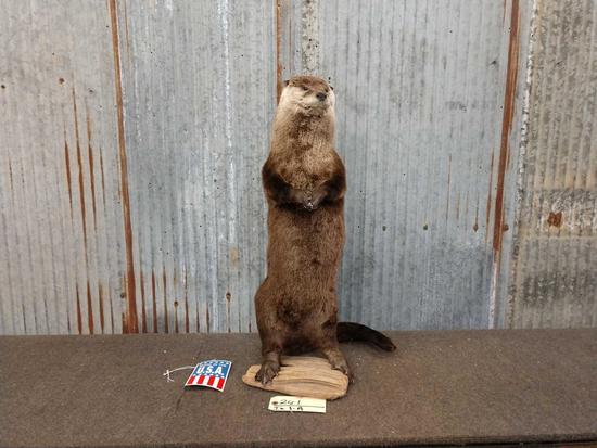Brand New Standing Otter