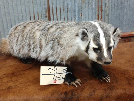 Full body mount badger