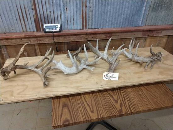 4 Big Gnarly Whitetail Sheds