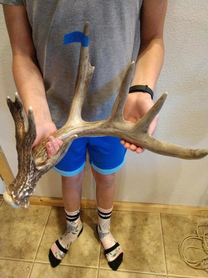 """78"""" Canadian Whitetail Shed"""
