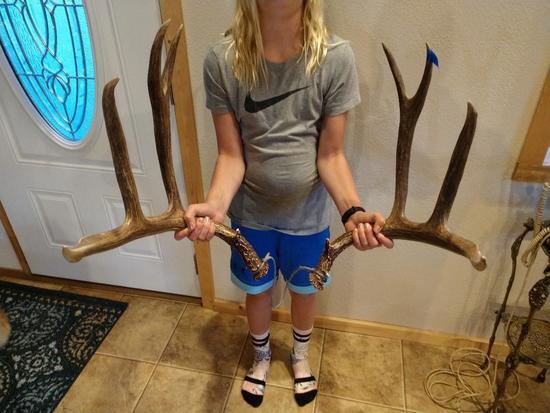 """183"""" Canadian Mule Deer Sheds"""