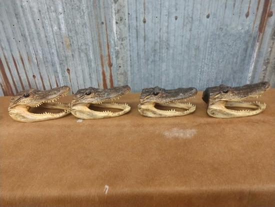 4 mounted alligator heads