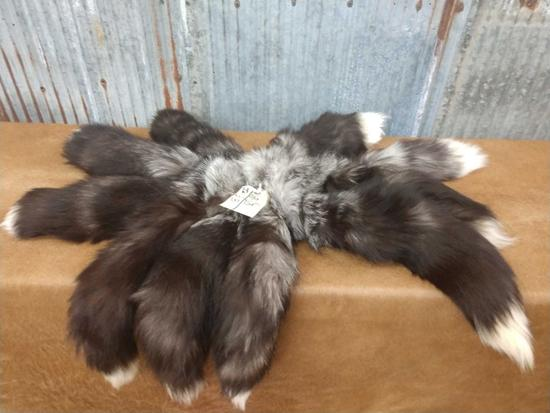 10 silver fox tails