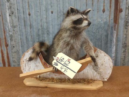 Full body mount juvenile raccoon in birch bark canoe