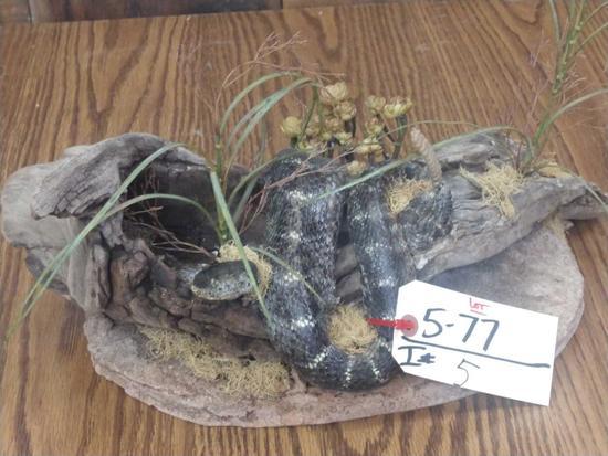 Canebrake Rattle Snake Mount