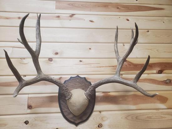 """Big mule deer rack 5 x 6 scores 173"""""""