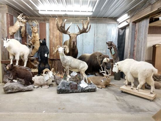 Spring Whitetail Classic Day 2 Taxidermy & Decor