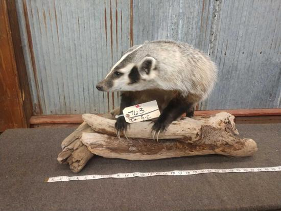 Big Full Body Mount Badger