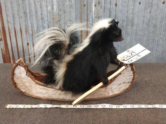 Full Body Mount Skunk In A Canoe