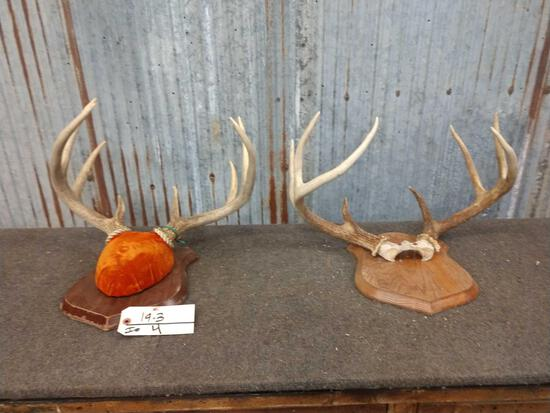 2 Whitetail Racks On Plaques
