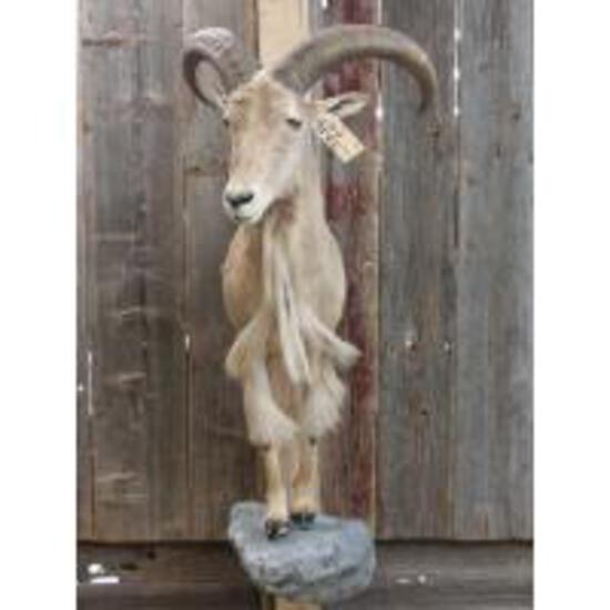 Blow Out Fire Sale Taxidermy Antlers Furs Skulls