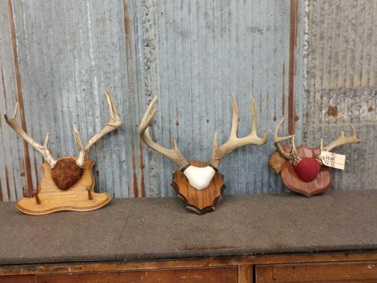 3 Sets Whitetail Antlers On Plaque