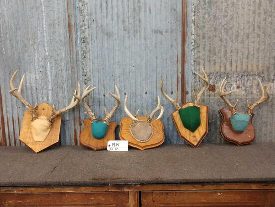 5 Sets Of Whitetail Antlers On Plaque