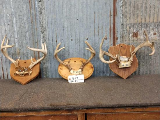 3 Sets Of Whitetail Antlers On Plaque