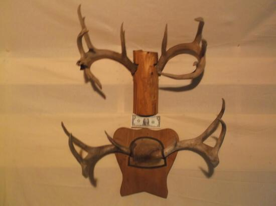 2 Sets of mounted whitetail shed antlers