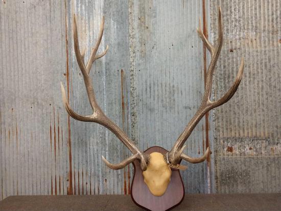 8x7 Elk Antlers On Plaque