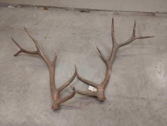 6x6 Elk Shed Antlers