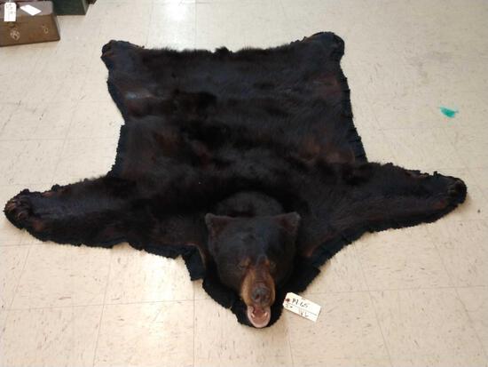 Nice Black Bear Rug Taxidermy