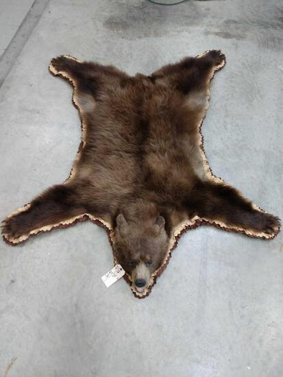 Brown Phase Black Bear Rug Taxidermy