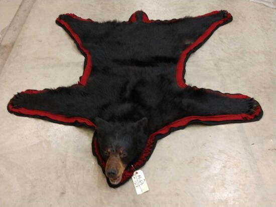 Black Bear Rug Taxidermy