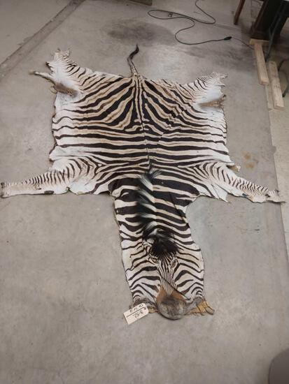 African Zebra Skin Soft Tanned Taxidermy