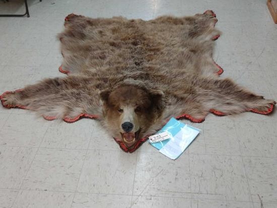 Alaska Brown Bear Rug Taxidermy