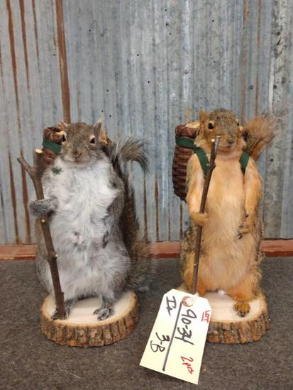 2 Backpacking Squirrels Taxidermy