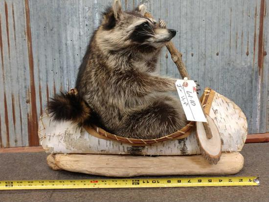 Raccoon In A Birch Bark Canoe