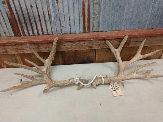 Main Frame 5x5 Whitetail Antlers