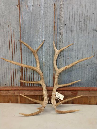 12.8 lbs Elk Antler Cuts