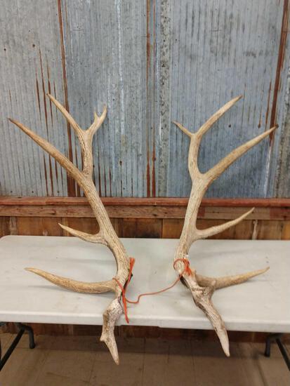 20.4 lbs Elk Antler Cuts