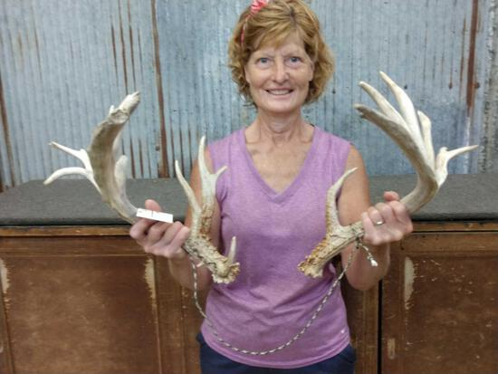 Crazy Nontypical Whitetail Shed Antlers