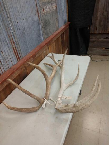 11.2 lbs Elk Antler Cuts