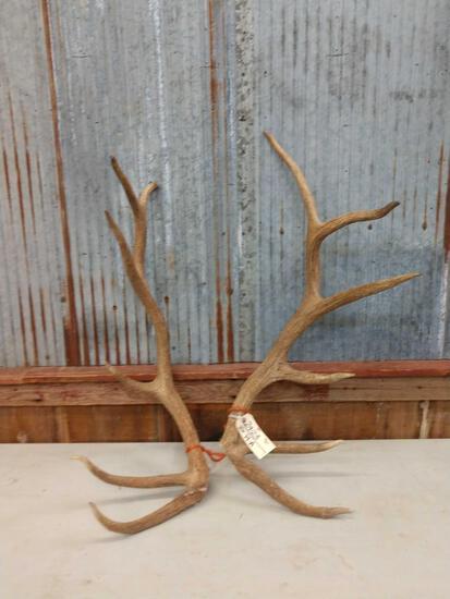 12 lbs Elk Antler Cuts