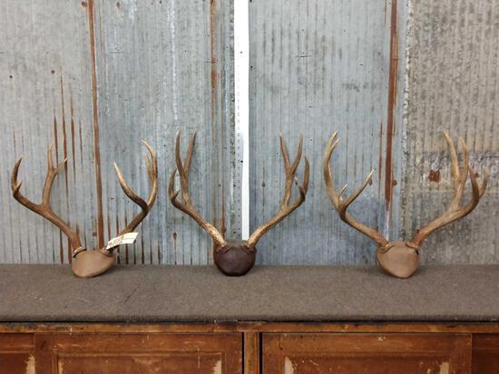 3 Sets Of Mule Deer Antlers