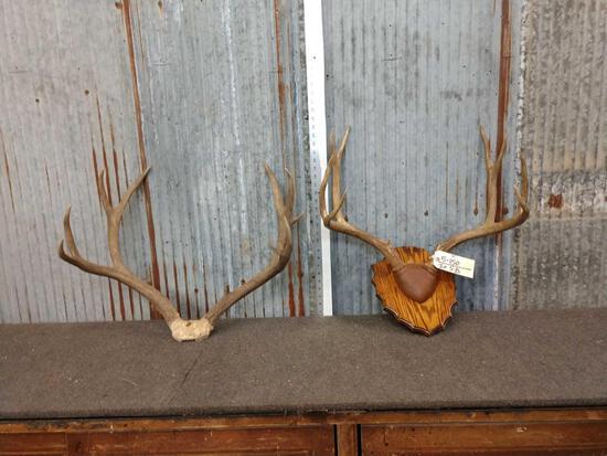 2 Sets of Mule Deer Antlers