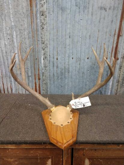 5x5 Mule Deer Antlers On Plaque