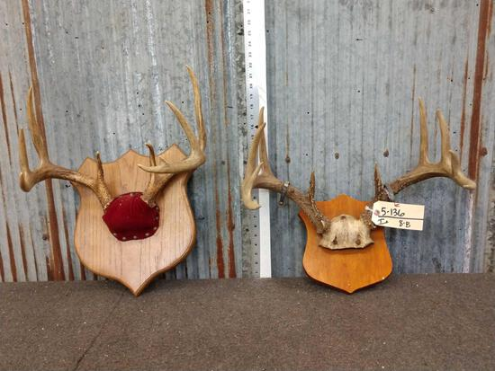 2 Sets Of Whitetail Antlers On Plaque