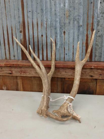 5.8lbs Elk Sheds