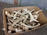 13 Lbs Of Whitetail Antler Chunks