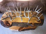 Group Of 8 Wild Whitetail Shed Antlers