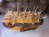 11 Mule Deer Shed Antlers