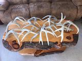 Group Of 12 Whitetail Shed Antlers