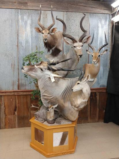 African Mountain multiple taxidermy mount