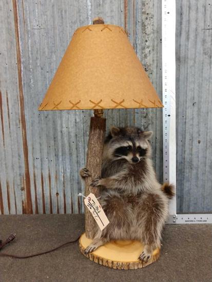Raccoon Lamp Taxidermy Mount