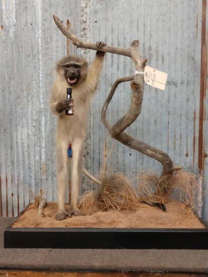Drunken Vervet Monkey Full Body Taxidermy Mount