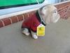 UGA Bulldog Plaster