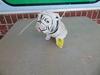 UGA Plaster Bulldog