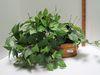 Brass Planter w/ Faux Greenery