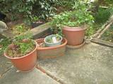 Lot - Misc. Molded Plastic Planters & Live Plants